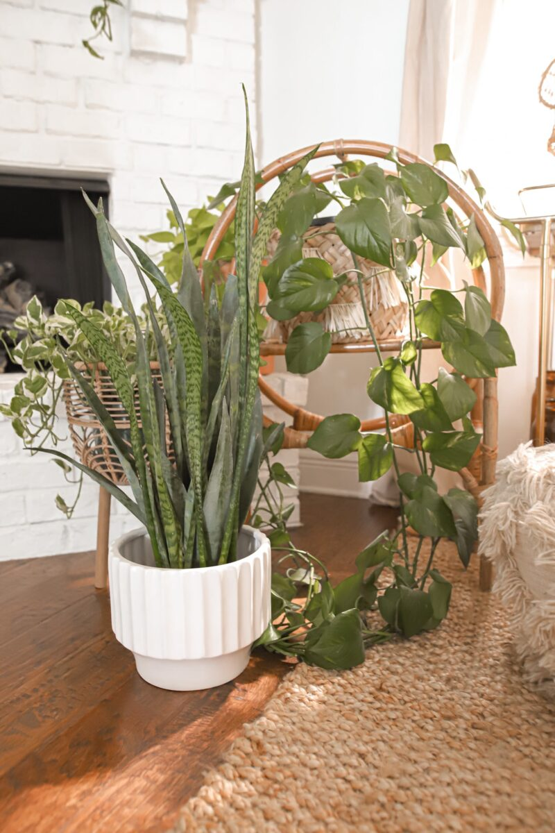 EASIEST HOUSEPLANTS TO KEEP ALIVE, PLANTS FOR BEGINNERS, PLANT MOM TIPS